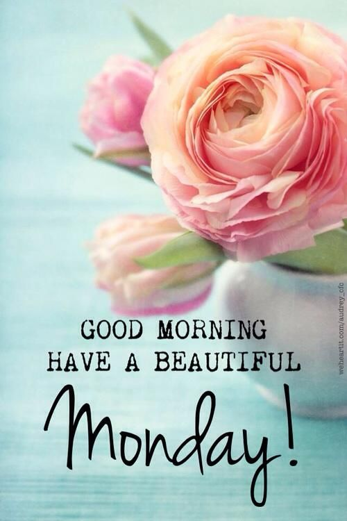 Good Morning Quotes 15