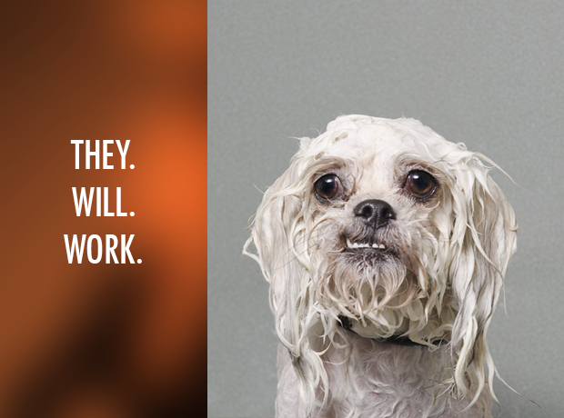 10-things-only-people-with-fine-hair-will-understand-wet-dog-will-work