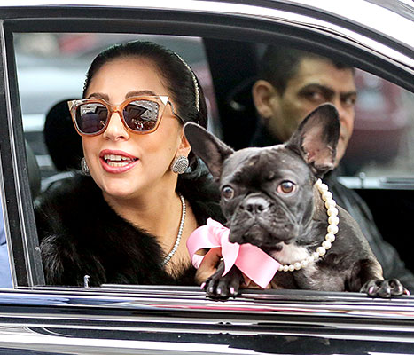 Lady Gaga and her dog Asia were spotted rocking glam looks while taking a private car service in NYC.