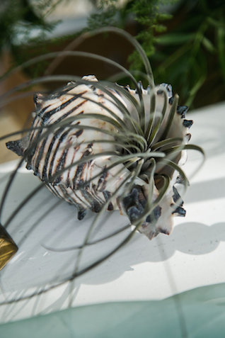 Air plant in seashell | John Bello | see more on: http://burnettsboards.com/2015/07/disneys-mermaid-wedding/