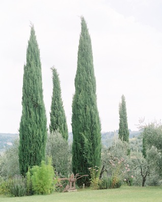 Tuscany ⎪Igloo Photo ⎪ see more on: http://burnettsboards.com/2015/08/tuscan-wedding-touch-whimsy/
