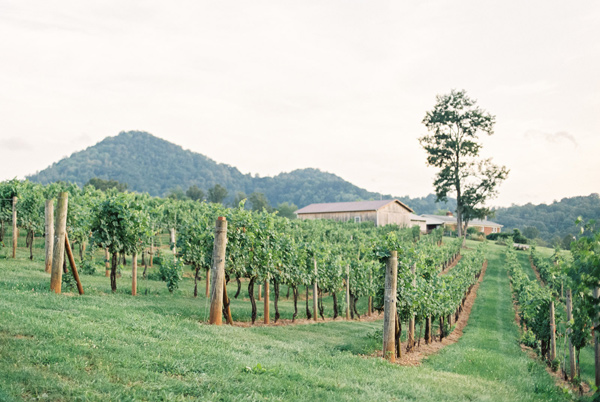 vineyard wedding - photo by Wedding Nature Photography http://ruffledblog.com/elegant-vineyard-wedding-inspiration