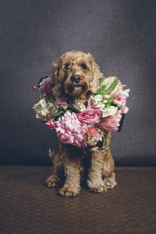 Flower collar for dogs ⎟ I Heart Weddings and Flower Talk ⎟ see more on: http://burnettsboards.com/2015/10/dogs-flower-crowns/