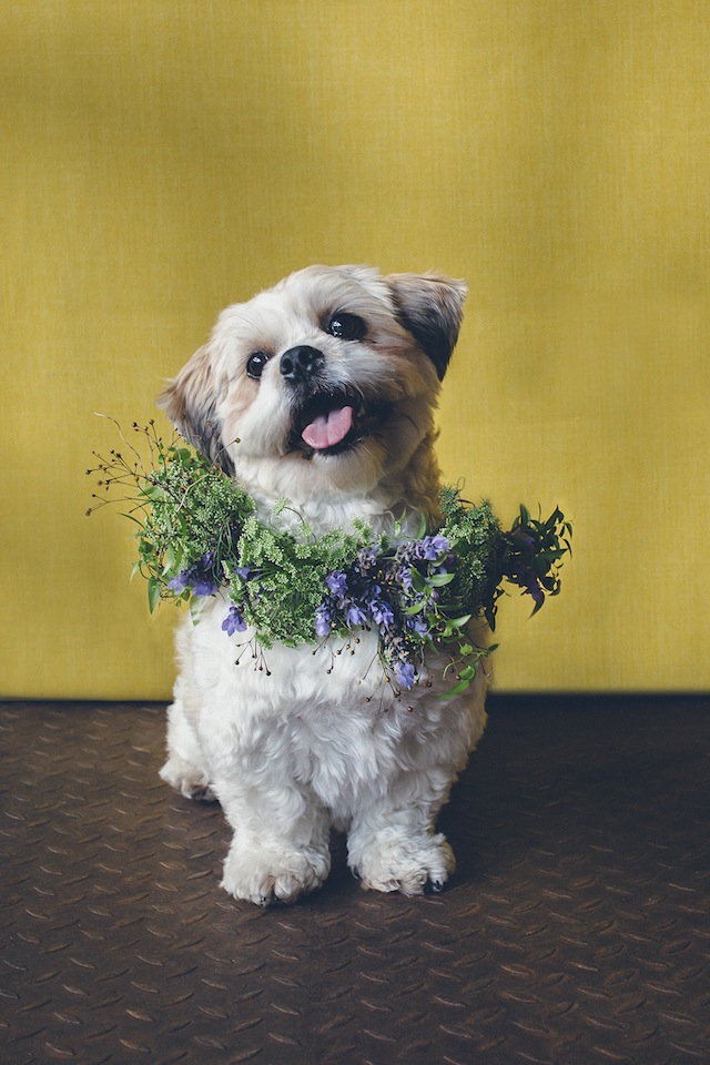 Pets in weddings ⎟I Heart Weddings and Flower Talk ⎟ see more on: http://burnettsboards.com/2015/10/dogs-flower-crowns/