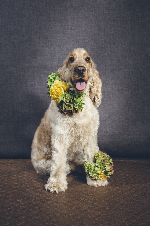 Dogs in weddings ⎟ I Heart Weddings and Flower Talk ⎟ see more on: http://burnettsboards.com/2015/10/dogs-flower-crowns/