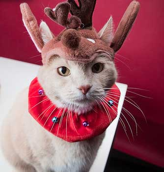 Kittens Christmas Outfits – 20 Christmas Costumes For Cats | Beauty