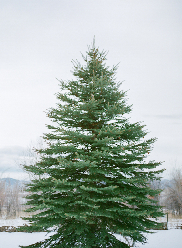 Pine tree in winter | Shannon Von Eschen Photography | see more on: http://burnettsboards.com/2015/12/grooms-shoot/