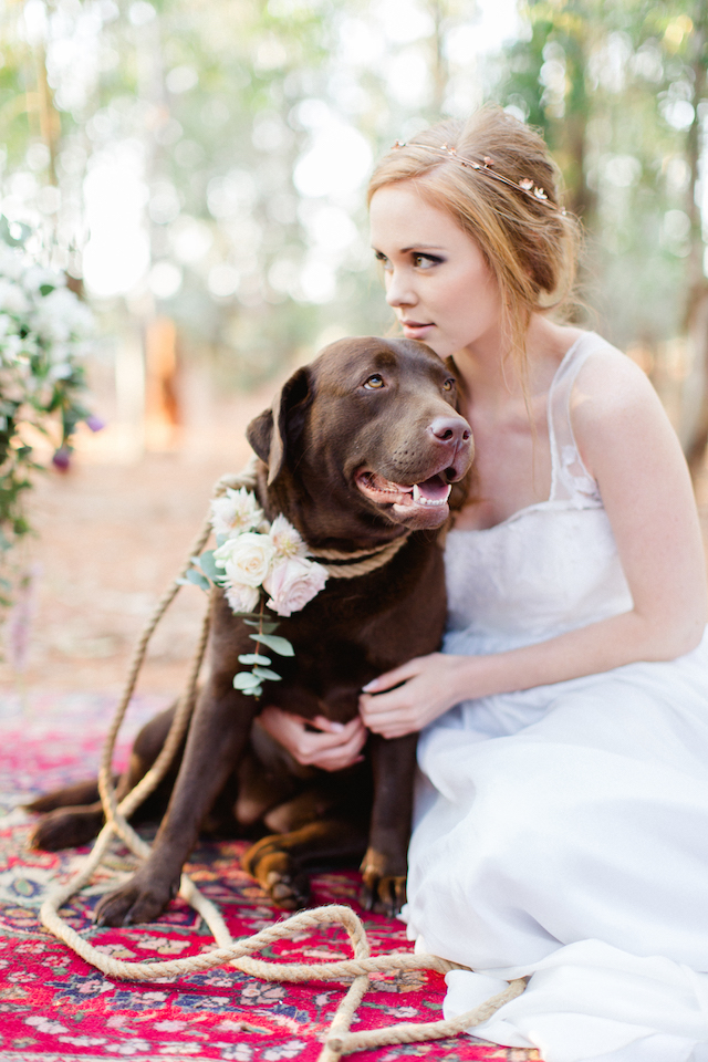 Bride with her dog | Carolien & Ben Photography | see more on: http://burnettsboards.com/2016/02/south-african-bohemian-forest-elopement/