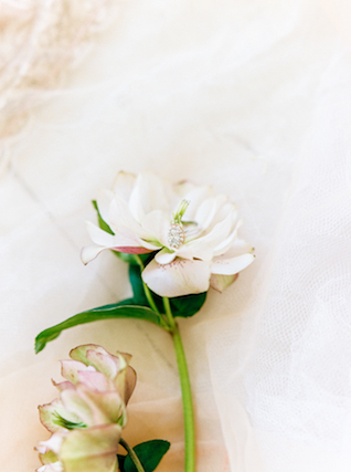Wedding ring on a flower | Callie Manion Photography