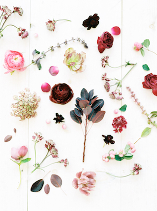 Loose blooms | Callie Manion Photography