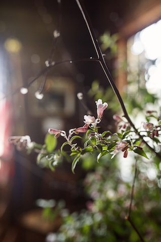 Tiny pink florals | Erica Ann Photography | Burnett's Boards