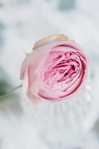 Pink single bloom | Anna Bamm Photography