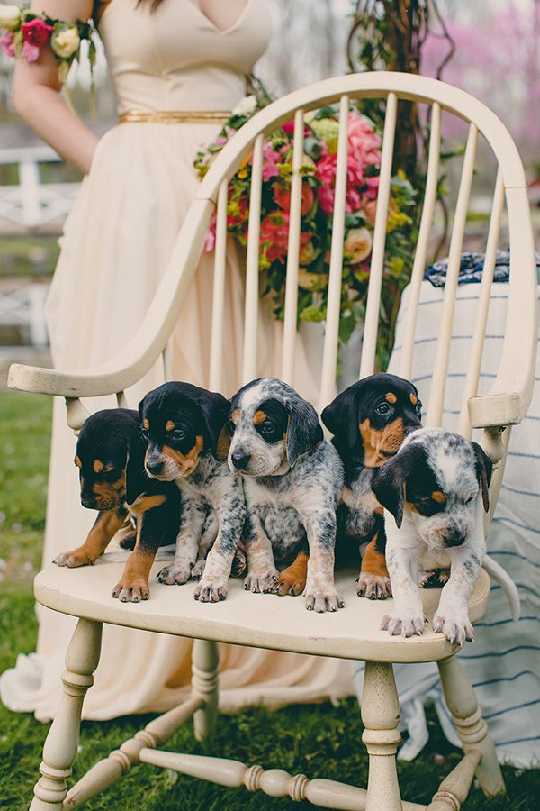 pets at weddings - photo by Tree of Life Films http://ruffledblog.com/summer-brunch-wedding-inspiration