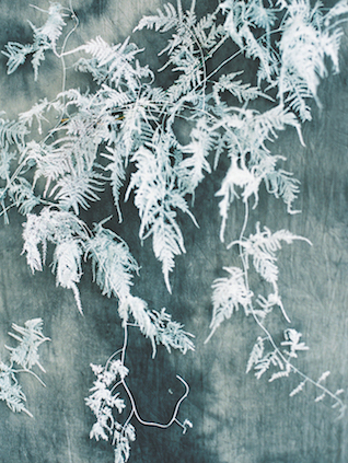 Frosted plants | Svetlana Strizhakova