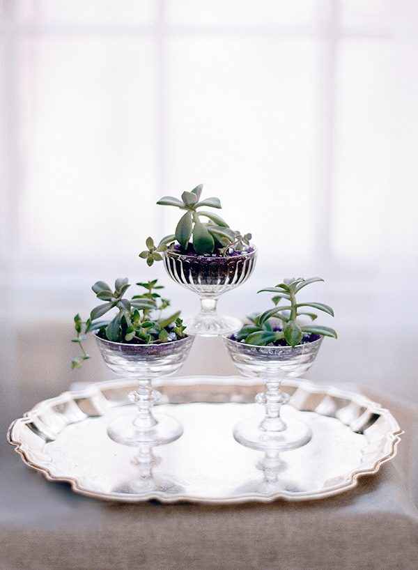succulent favors - photo by Audra Wrisley Photography http://ruffledblog.com/botanical-lavender-bridal-inspiration