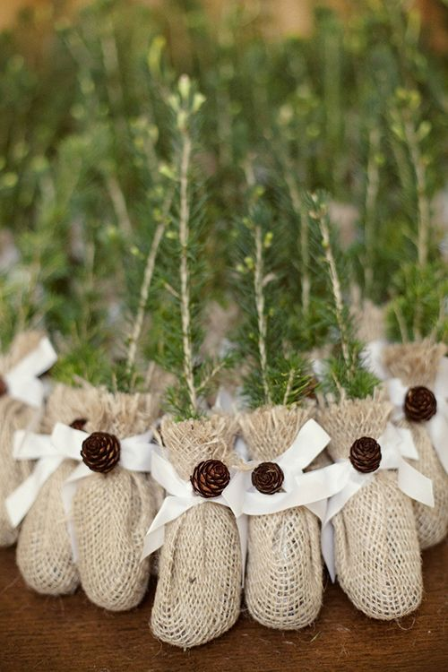 tree saplings in burlap sacks with pinecone bows