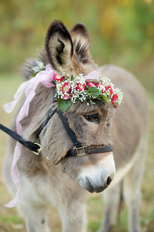 Donkey with a flower crown | elovephotos