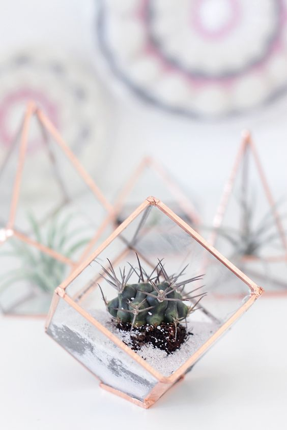 small cube terrarium with a cacti