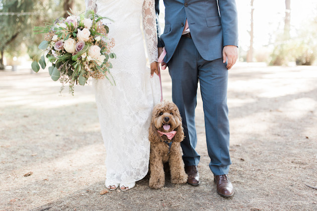 Pets in weddings | Jenny Quicksall Photography