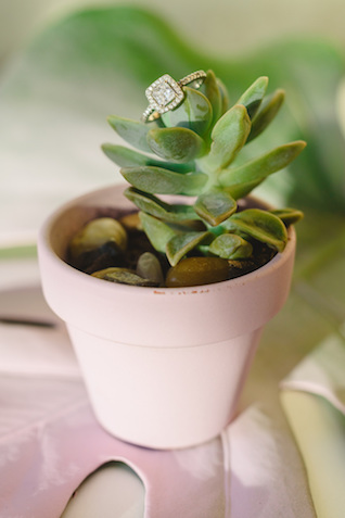Succulent pot | Jessilynn Wong Photography