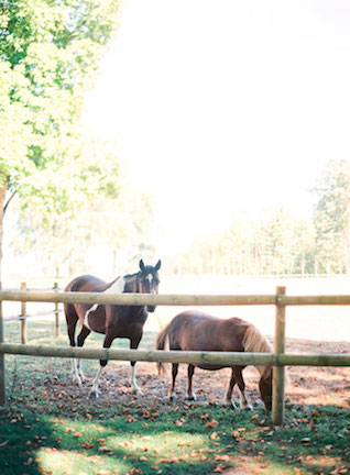 Horses in France | Zosia Zacharia Photography