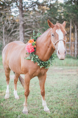 Horse with flower wreath | Nicole Chatham Photography