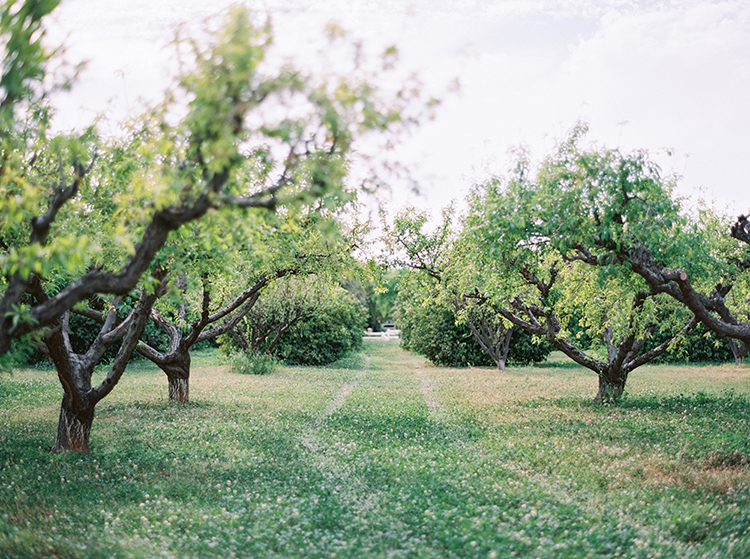 citrus orchard weddings - photo by Melissa Jill Photography http://ruffledblog.com/citrus-and-copper-orchard-wedding-inspiration
