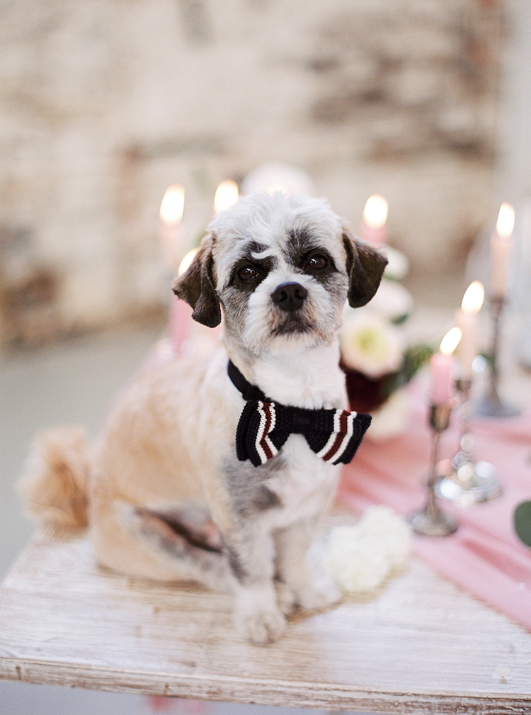 pets at weddings - photo by Linda Nari Photography http://ruffledblog.com/tuscan-warehouse-wedding-inspiration-with-a-floral-bridal-gown