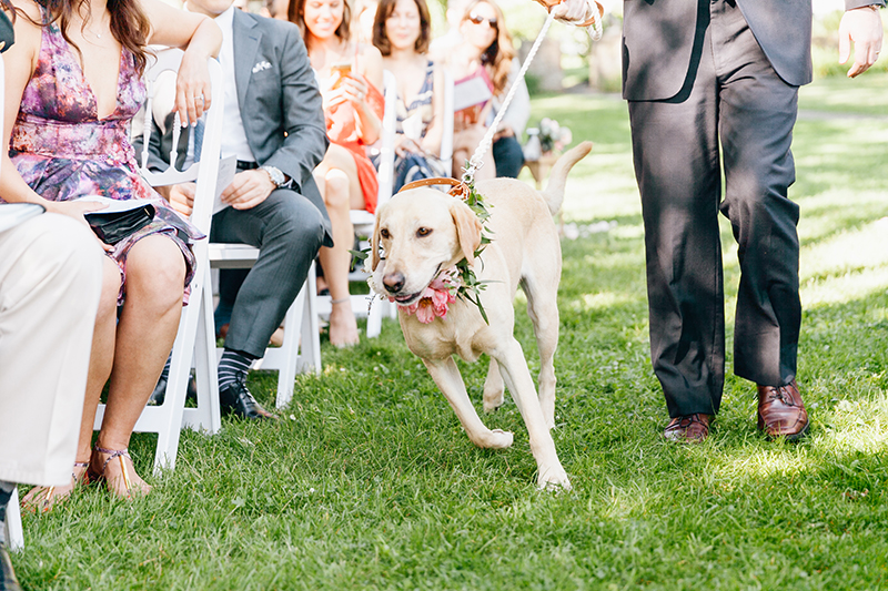 pets at weddings - photo by Emily Wren Photography http://ruffledblog.com/bright-beautiful-summer-wedding-with-geometric-accents