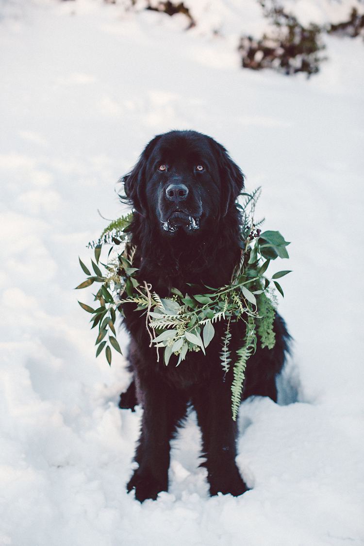 pets at weddings - photo by Lilly Red Creative http://ruffledblog.com/lake-tahoe-beach-wedding-inspiration