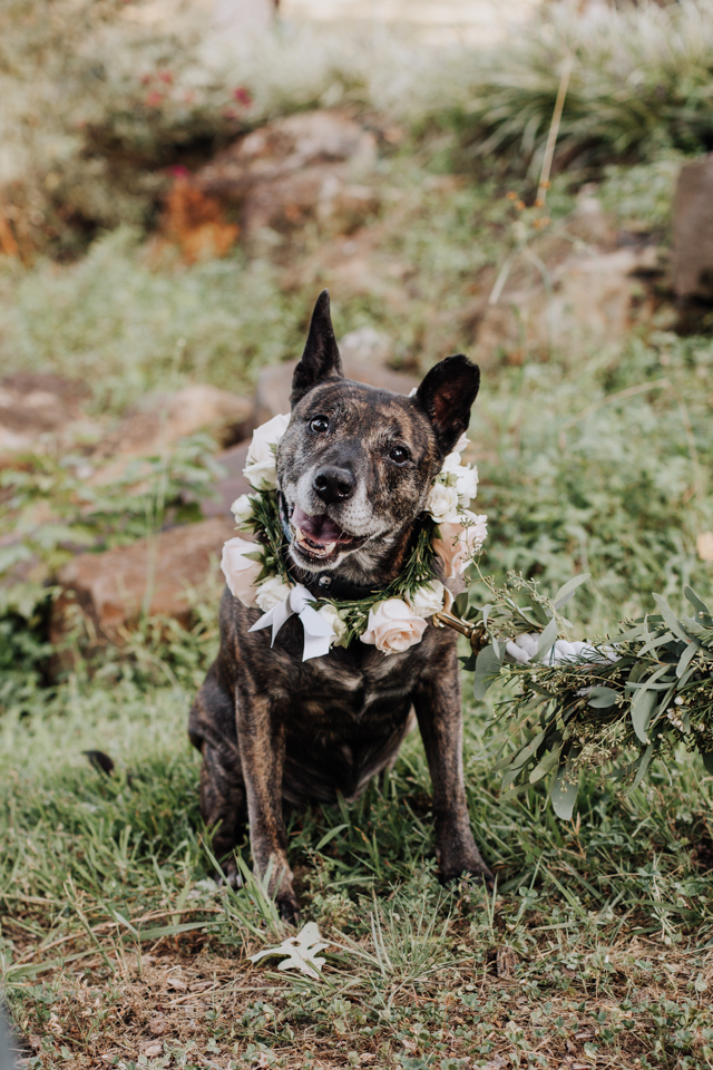 Dog with a flower garland