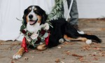 adopt a shelter dog wedding inspiration