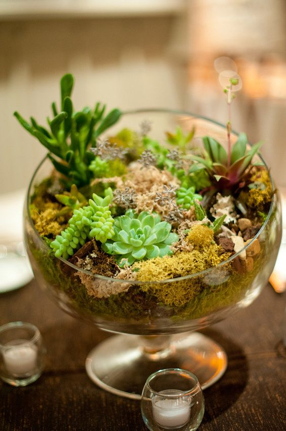 a bowl with moss and succulents for a cute look - terrariums are super trendy today