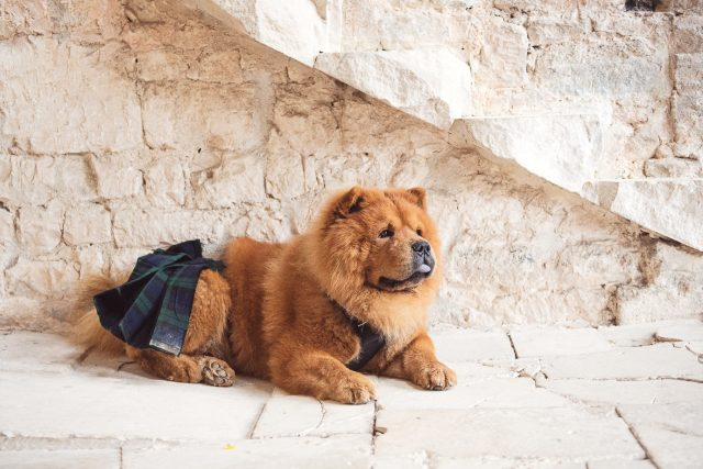 Their dog was wearing a kilt for the ceremony