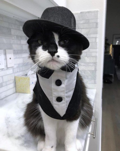 Funny-Cat-Outfits10 Funny Outfits For Cats – 20 Most Funny Clothes For Cats