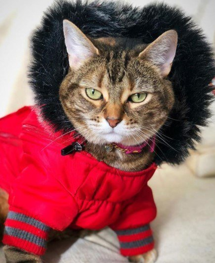 Funny-Cat-Outfits9 Funny Outfits For Cats – 20 Most Funny Clothes For Cats
