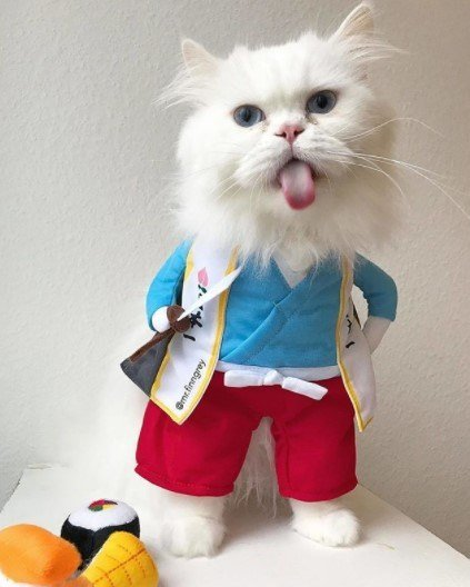 Funny-Cat-Outfits14 Funny Outfits For Cats – 20 Most Funny Clothes For Cats