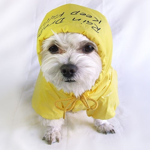 Raincoats-for-dogs Funny Outfits for Dogs – 20 Most Funny Clothes for Dogs