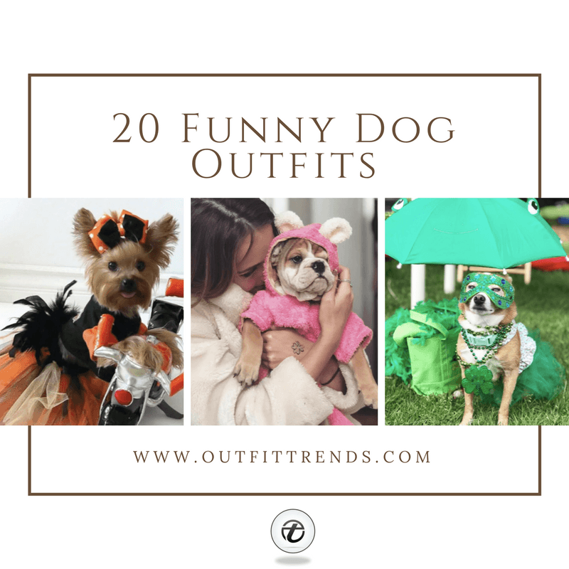 20-Funny-Dog-Outfits Funny Outfits for Dogs – 20 Most Funny Clothes for Dogs