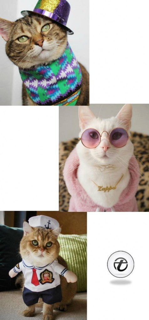 Funny-Cat-Outfits22-476x1024 Funny Outfits For Cats – 20 Most Funny Clothes For Cats