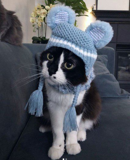 Funny-Cat-Outfits11 Funny Outfits For Cats – 20 Most Funny Clothes For Cats