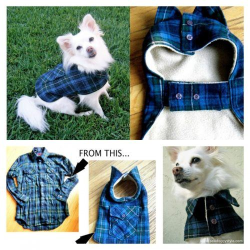 DIY-Dog-Outfits-500x500 Funny Outfits for Dogs – 20 Most Funny Clothes for Dogs