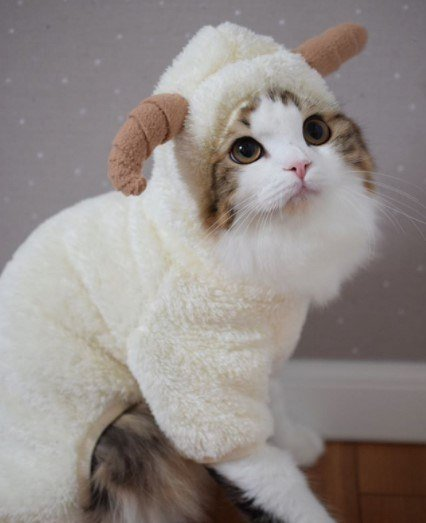 Funny-Cat-Outfits15 Funny Outfits For Cats – 20 Most Funny Clothes For Cats