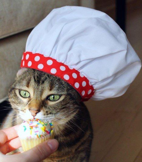 Funny-Cat-Outfits7 Funny Outfits For Cats – 20 Most Funny Clothes For Cats