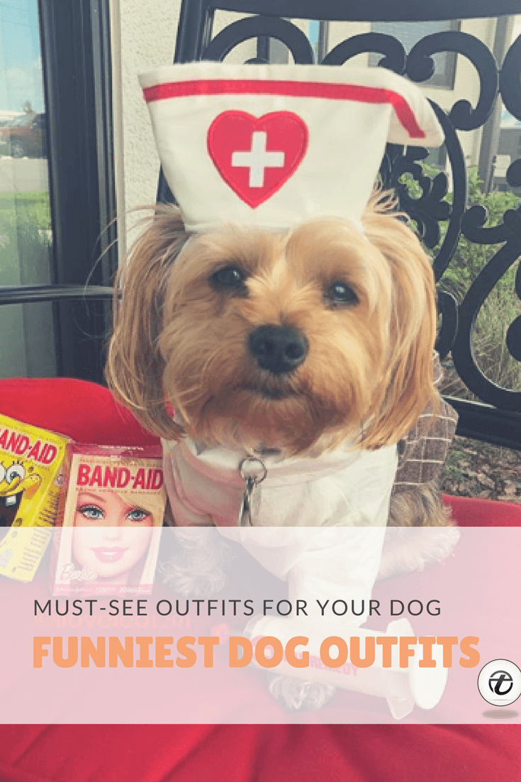 must-see-outfits-for-your-dog Funny Outfits for Dogs – 20 Most Funny Clothes for Dogs