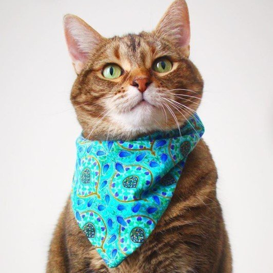 Funny-Cat-Outfits6 Funny Outfits For Cats – 20 Most Funny Clothes For Cats