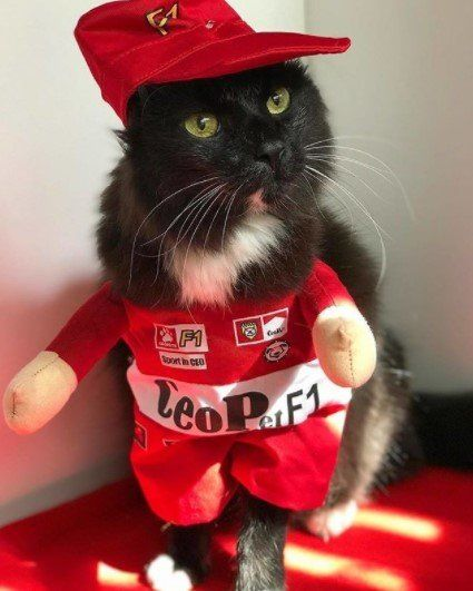 Funny-Cat-Outfits18 Funny Outfits For Cats – 20 Most Funny Clothes For Cats