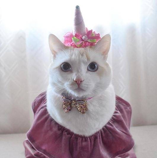 Funny-Cat-Outfits13 Funny Outfits For Cats – 20 Most Funny Clothes For Cats