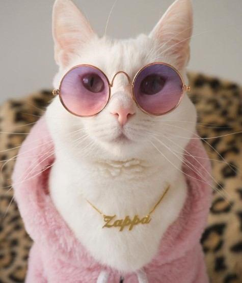 Funny-Cat-Outfits1 Funny Outfits For Cats – 20 Most Funny Clothes For Cats