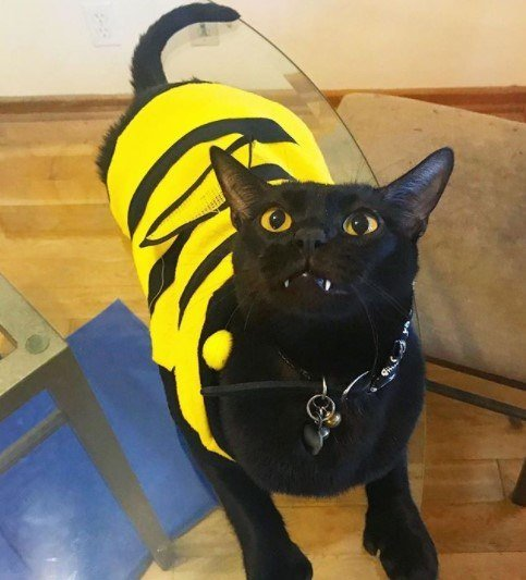Funny-Cat-Outfits4 Funny Outfits For Cats – 20 Most Funny Clothes For Cats